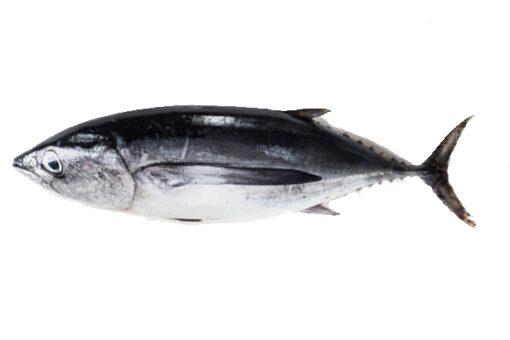 bonítol fesc peix a casa