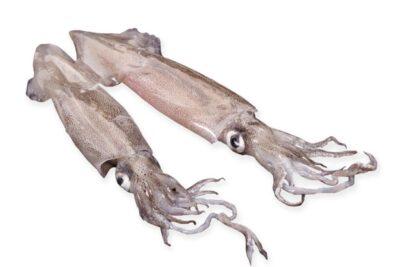 Calamar de platja fresco buenisimo marisco