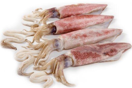 calamar del nord boníssim fresc marisc