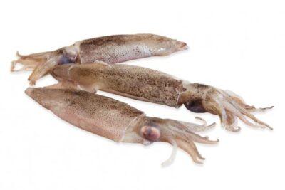 calamarcito marisco fresco