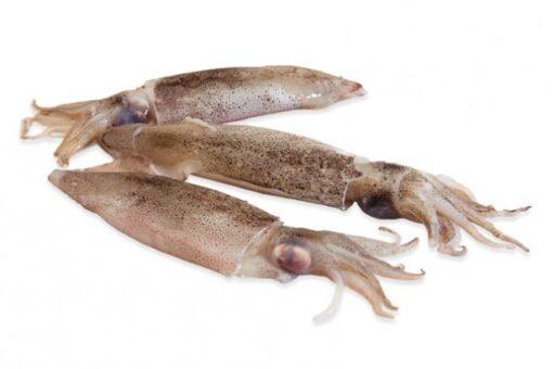 calamarset fresc marisc
