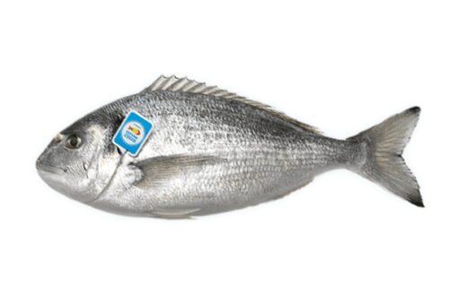 dorada nacional fresca pescado azul