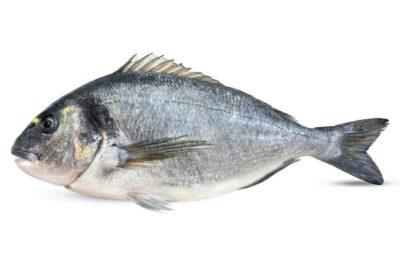orada salvatge peix fresc