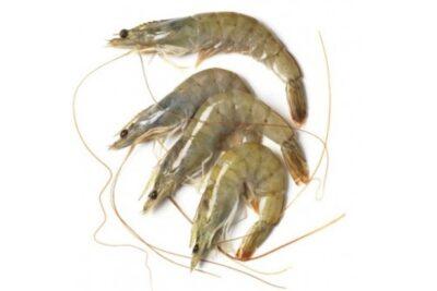 llagosti mitja fresc marisc Peix A Casa