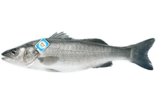 llobarro nacional fresc mediterrani peix