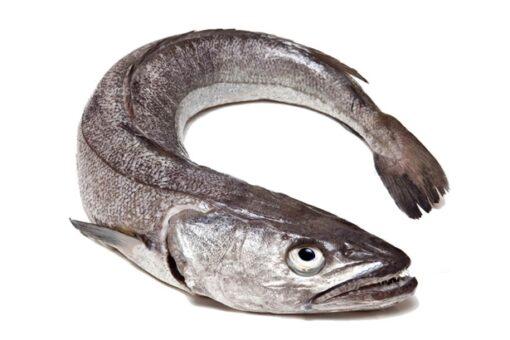 lluç del nord pesca amb xarxa