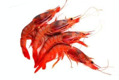 gamba vermella a granel marisc