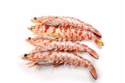 llagostí tigre fresc boníssim marisc