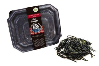 alga percebe fresca galicia