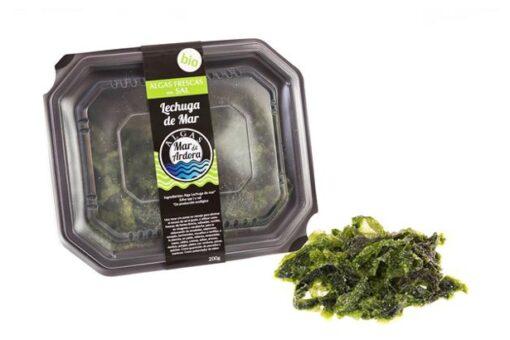 alga mar enciam fresca