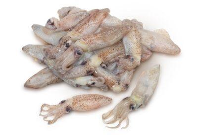 Xipiró chipirón calamar pequeño
